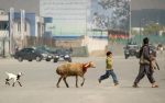 Afghanistan Abbey Road