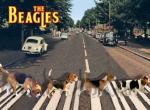 Beagles Abbey Road